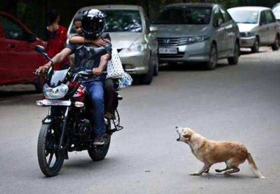 """揭秘!狗狗喜欢""""追车""""的原因"""