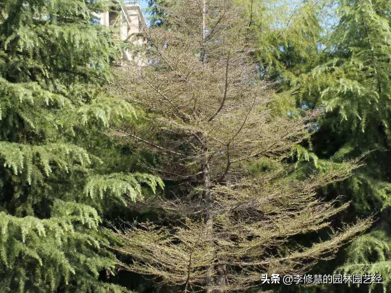 园林植物养护过程中常见病虫害及防治用药技术 植物病虫 第2张