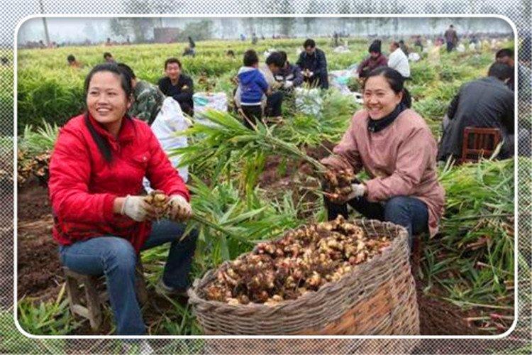 2021年选择在农村搞种植,种什么成本低、利润高、稳赚不赔?