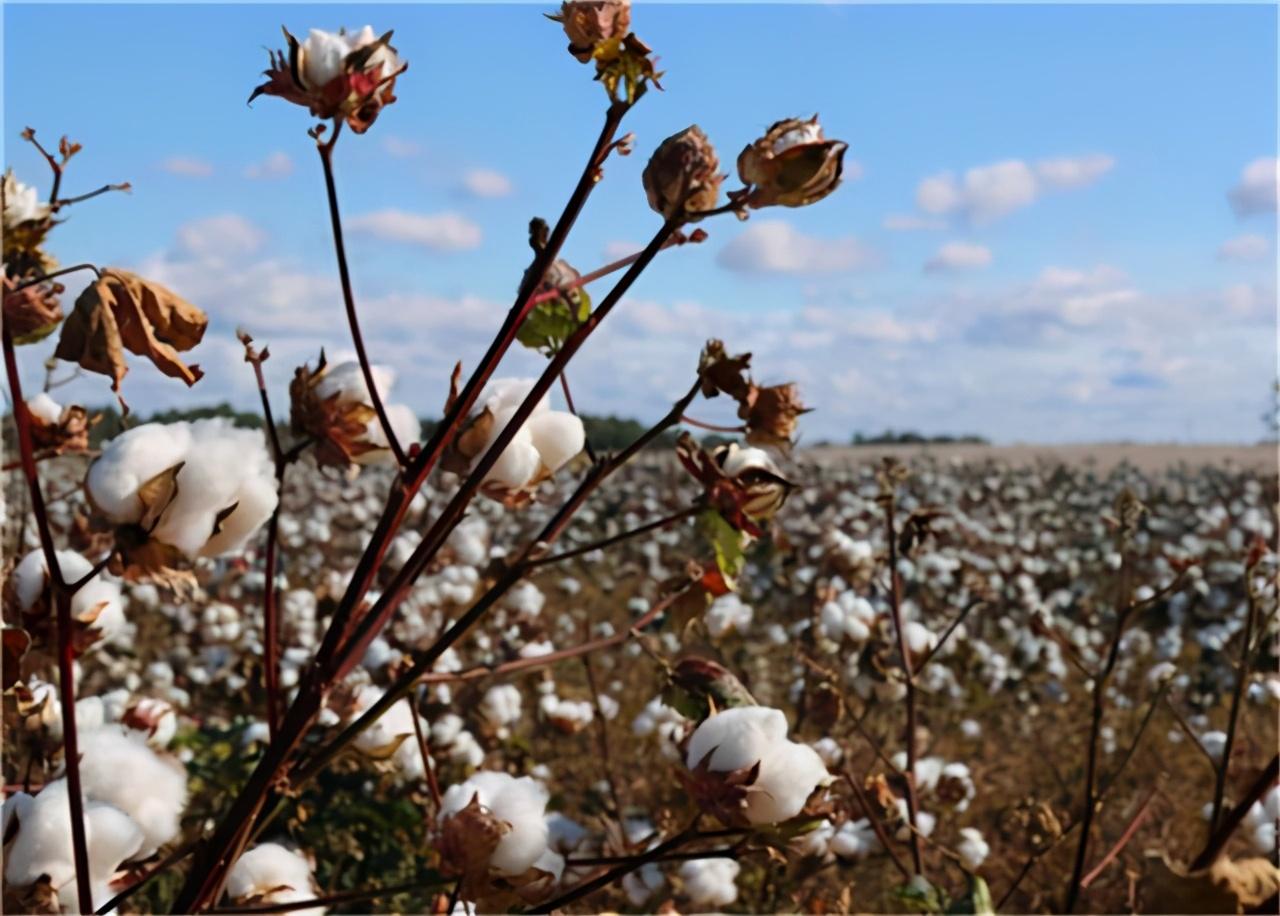一夜市值蒸发687亿!打错对中国棉花的算盘,耐克损失惨重 市值蒸发 中国棉花 耐克 第3张