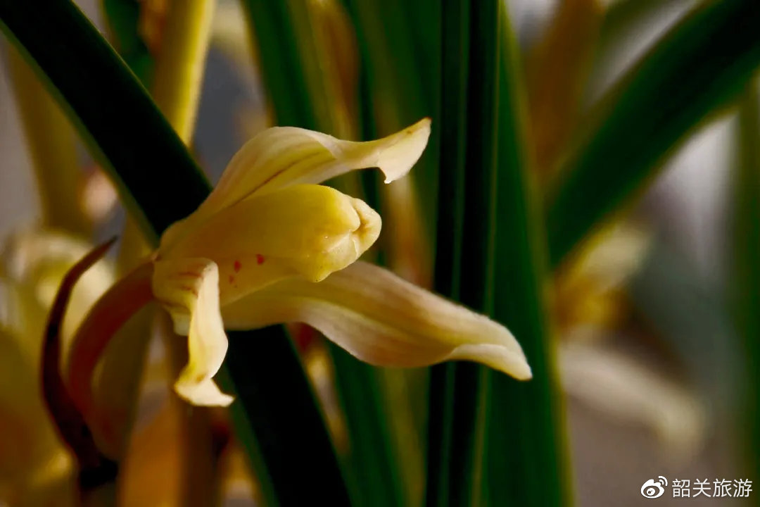 赏兰、以兰会友..这条特别的市花研学之旅,知识与趣味并重,不可错过