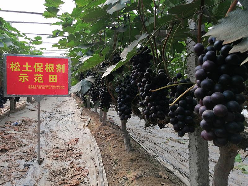 为什么说经济作物种植一定要了解松土促根土壤改良技术