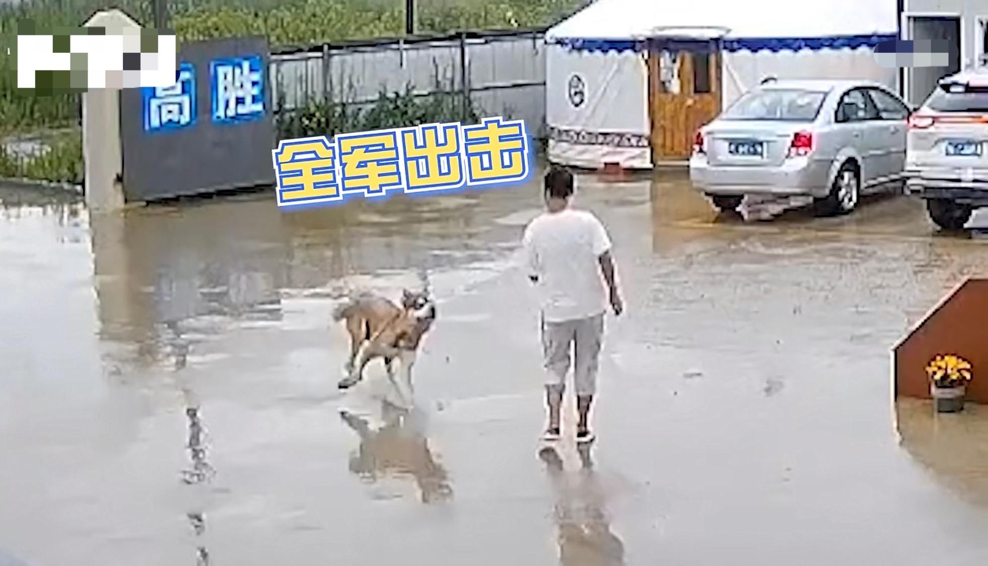 浙江男子雨天出门,狗子看到后上去一个滑铲,网友:它忍你很久了