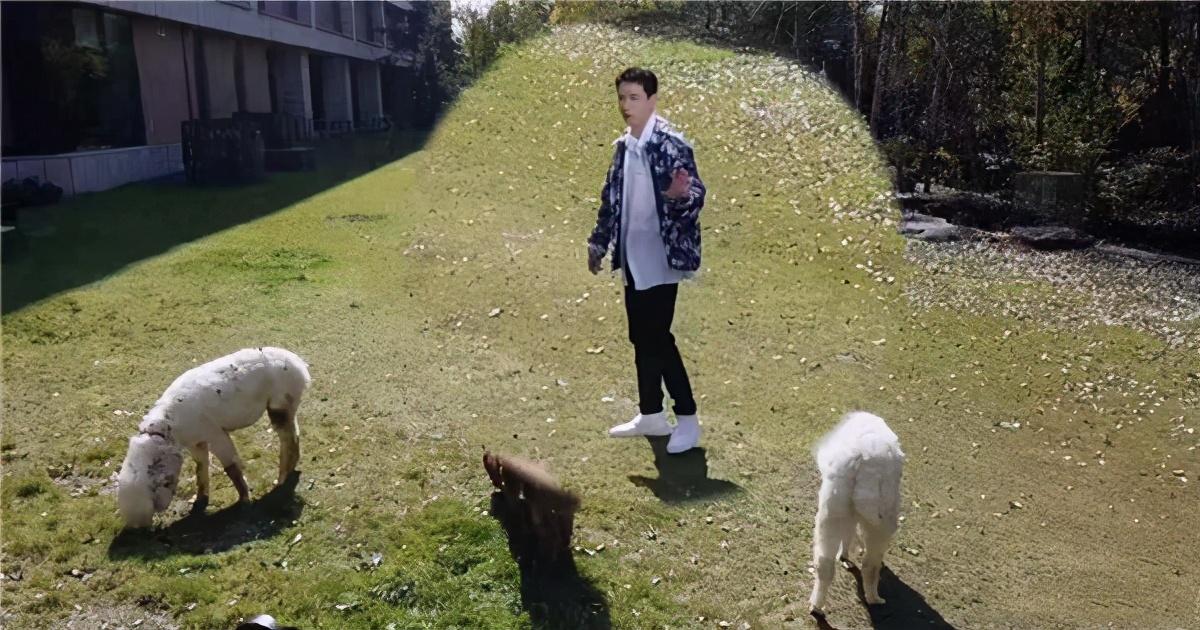 朱一龙的小学生日常,被羊驼吐口水,委屈记仇向工作人员告状