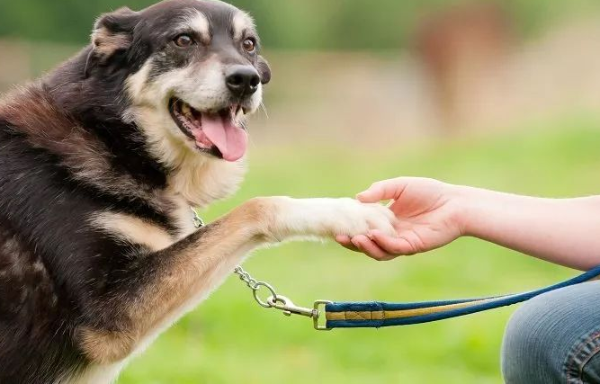 训练狗狗的6个方法,简单易学又省心