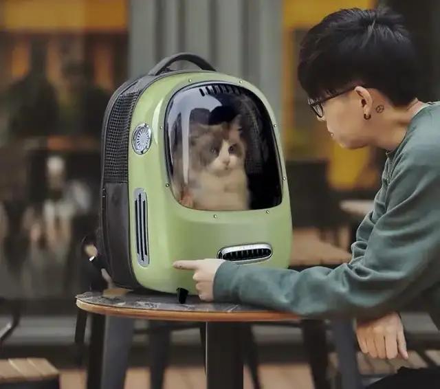 人不如猫狗?给宠物买东西花上万,一个厕所2000,值么?
