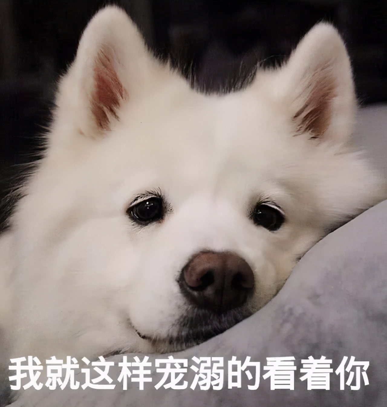 """""""乖巧""""的狗狗,都有这几种表现,证明你没白养它"""