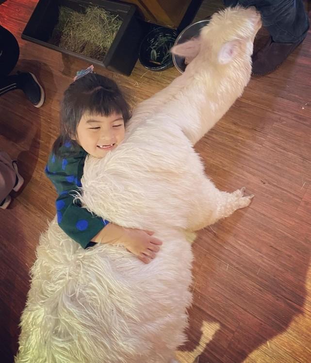 賈靜雯帶娃外出過週末,波妞熊抱羊駝超大膽,門牙脫落笑容很喜感
