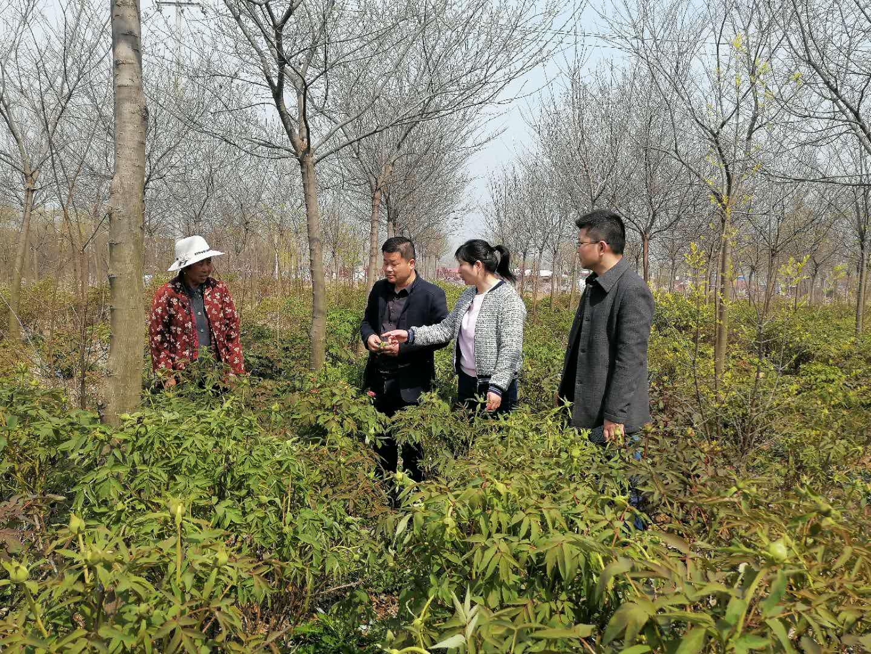 送物送技到地头――江苏花卉产业技术体系