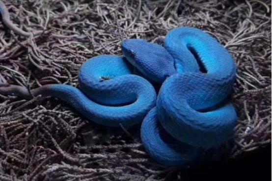 外貌更具特色的几种蛇类,一个比一个奇怪,你最喜欢哪个?