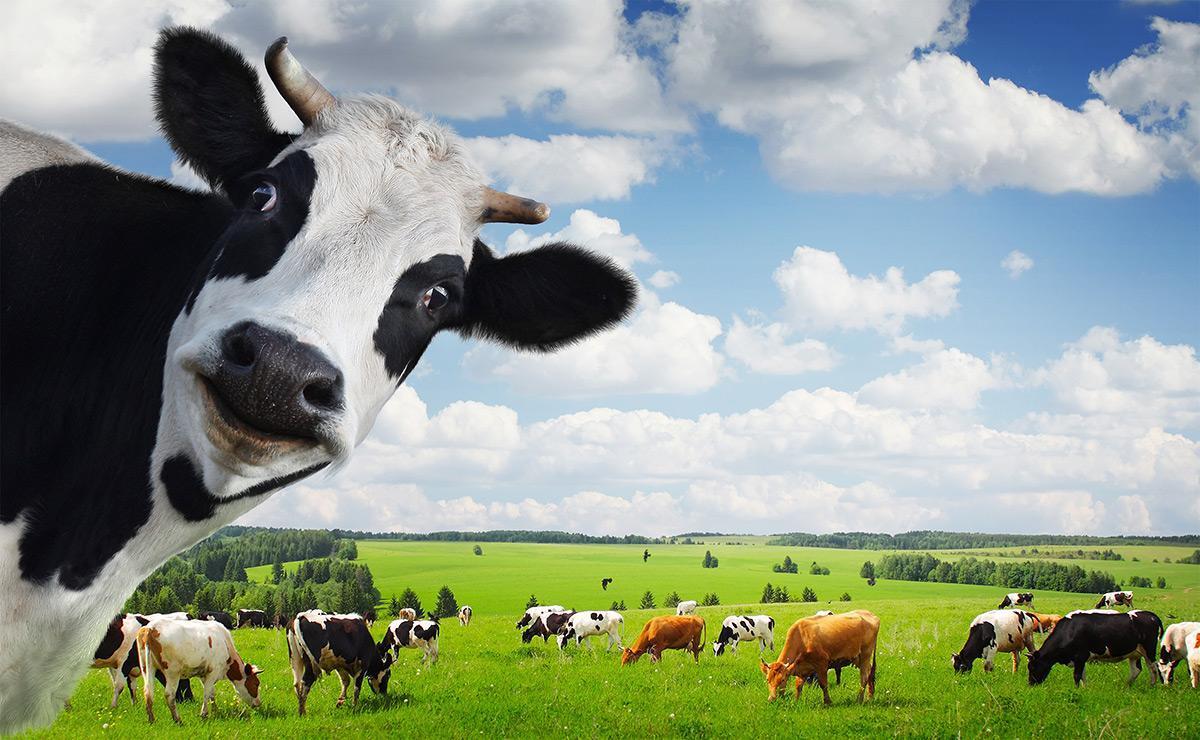 首付不够,可以向商家借钱!房产是灰犀牛还是牛?