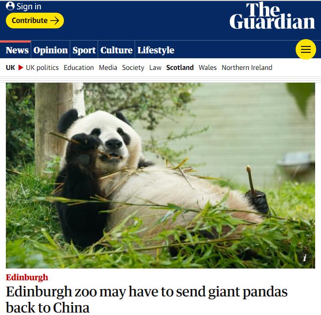 养不起了!因缺钱英国考虑将大熊猫送回中国