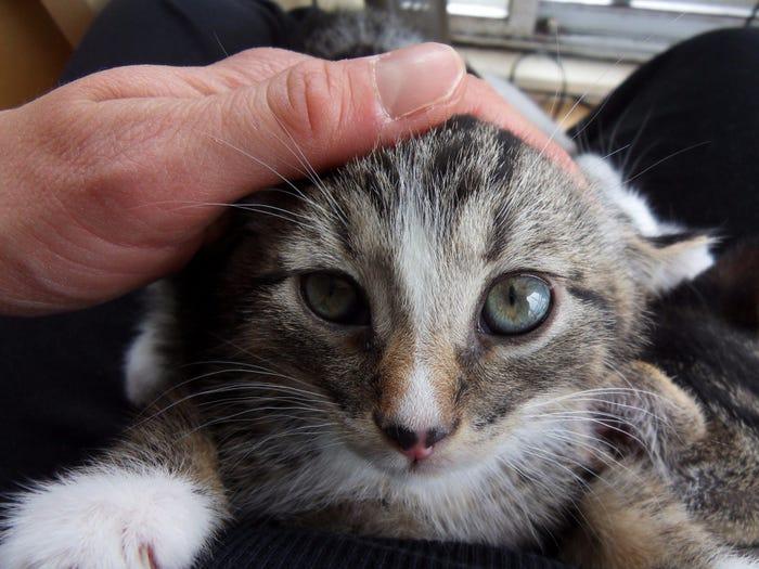 别误会,猫其实很爱你!这11个标志性的小动作出卖了它