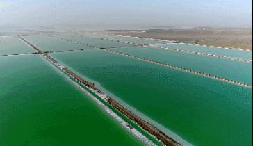 「选钾肥」认准国投罗钾生产的罗布泊硫酸钾