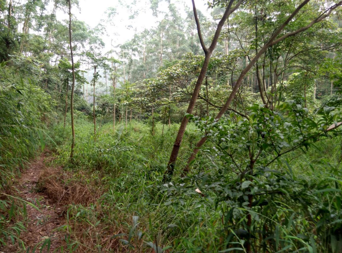 動態丨丟荒田,變良田——高明區墾造水田項目喜迎豐收