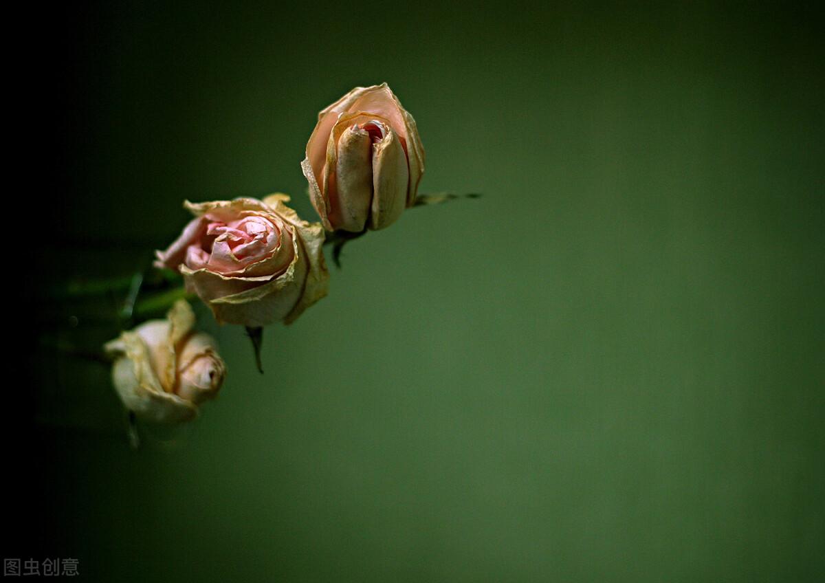 让人泪奔的悲伤句子,锥心刺骨,令人心碎