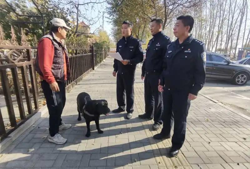管理进入常态化,违规犬面临依法收容了