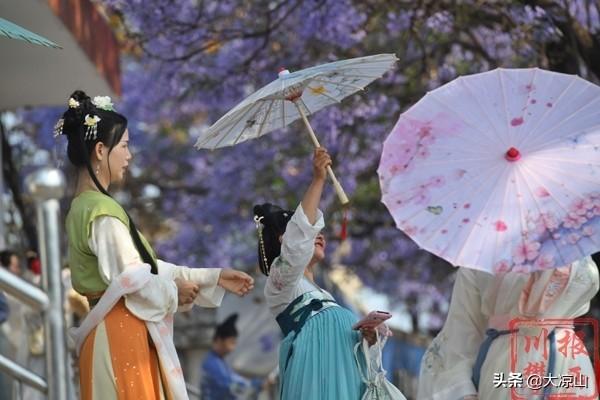美图西昌:紫色蓝花楹遇上汉服 开启一场浪漫穿越