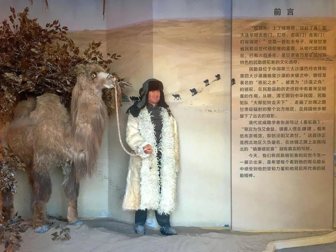 民勤县博物馆专题展《边塞诗史——民勤骆驼客》开展