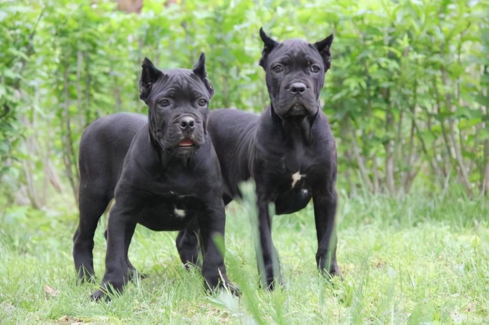 最忠诚的7种狗,永远都不会离开你,一生只为陪伴你而出现