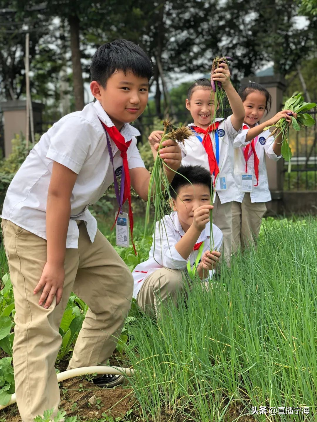 今日秋分!挖番薯、萝卜、南瓜...看孩子们这样庆丰收!