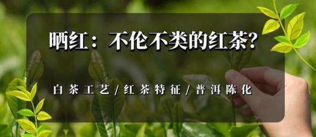 小茶控品鉴包の古树晒红:不伦不类的<a href='http://www.tea160.com/pindao/hongcha/hongcha.aspx' target='_blank' style='color:#009900;font-size: 16px;'  >红茶</a> 云南「晒红」初体验