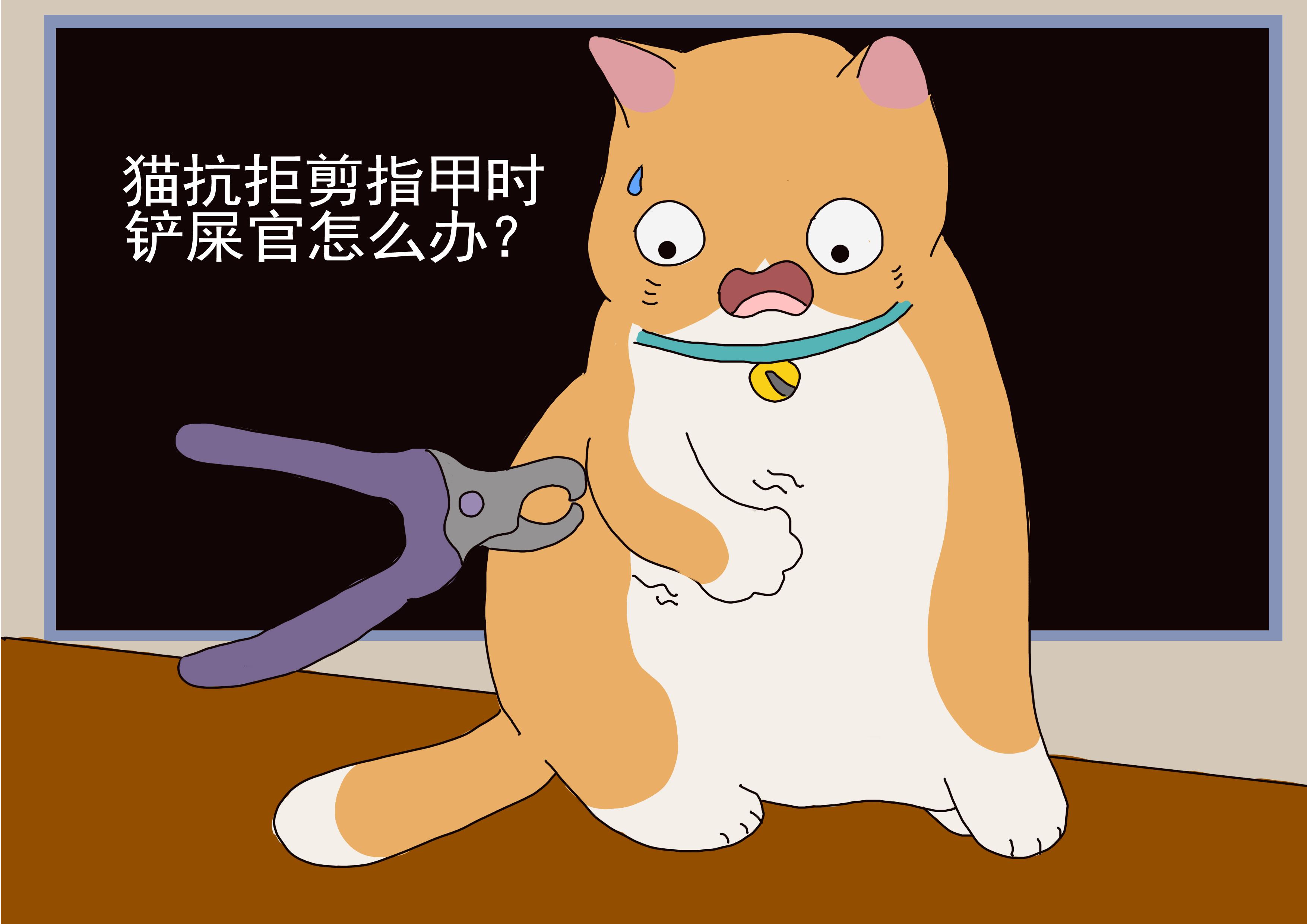 猫抗拒剪指甲时,铲屎官可以做3件事