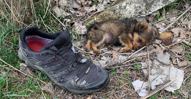 """高二英语时文阅读含答案:""""住""""在鞋里的狗狗 如何重获新生"""