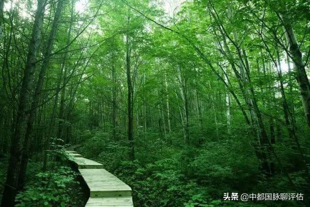 """某林業產權交易中心申請從事""""森林資源資產評估"""",需要什么前置許可?"""