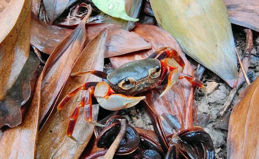 收藏!中国咸淡水螃蟹分类大全,看看你常吃的那些都叫什么?